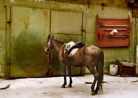 История лошади. Ощущение осени. (Валерия Лямеборшай)